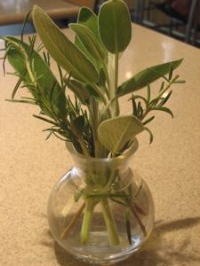herb-vase.jpg